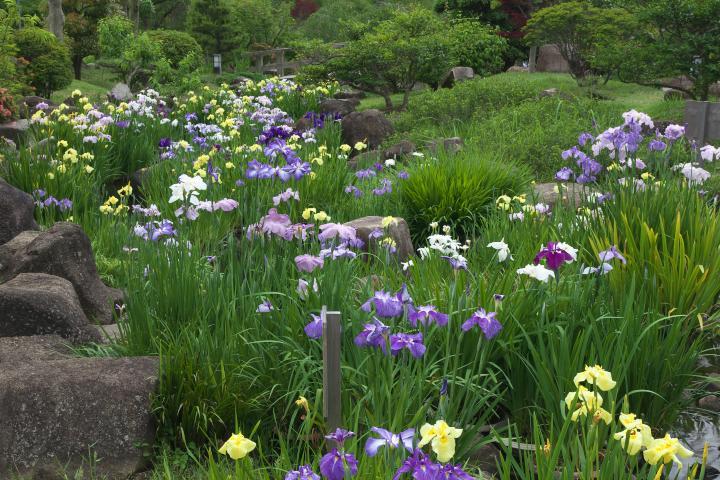 冠山総合公園しょぶ祭り1406