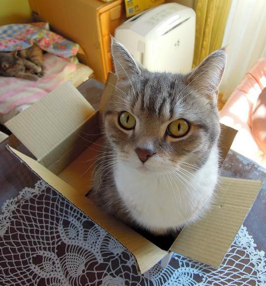 20140310箱猫