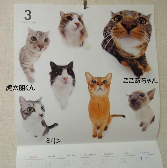 20140401THE CAT2