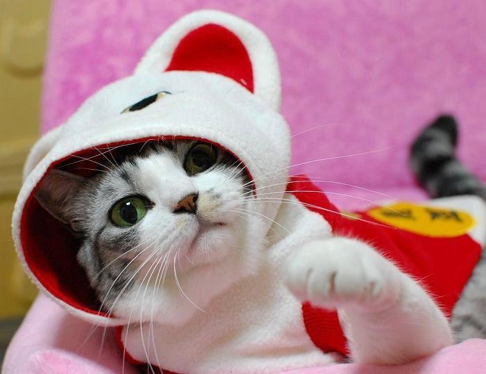 20091121招き猫