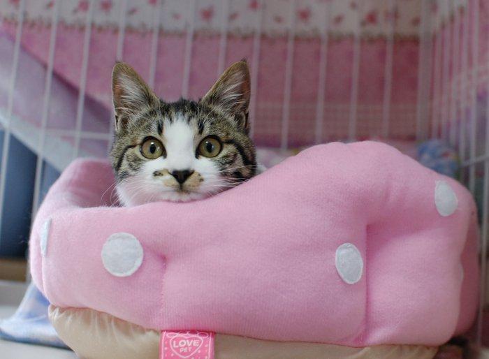 20140305ピンクのベッド