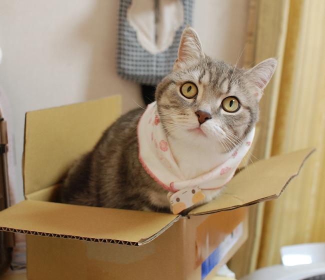 20140530箱猫