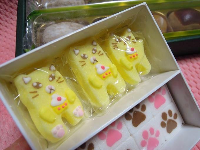 20140319猫のお砂糖