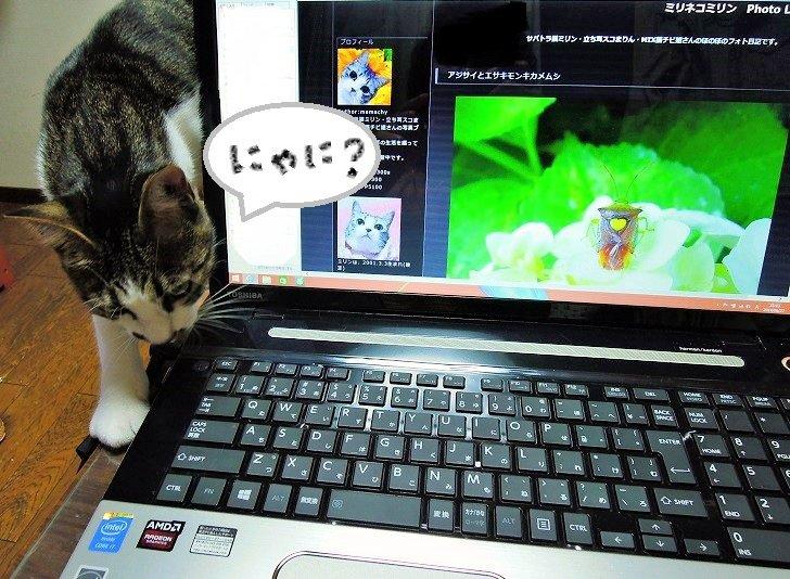 20140629ココとパソコン
