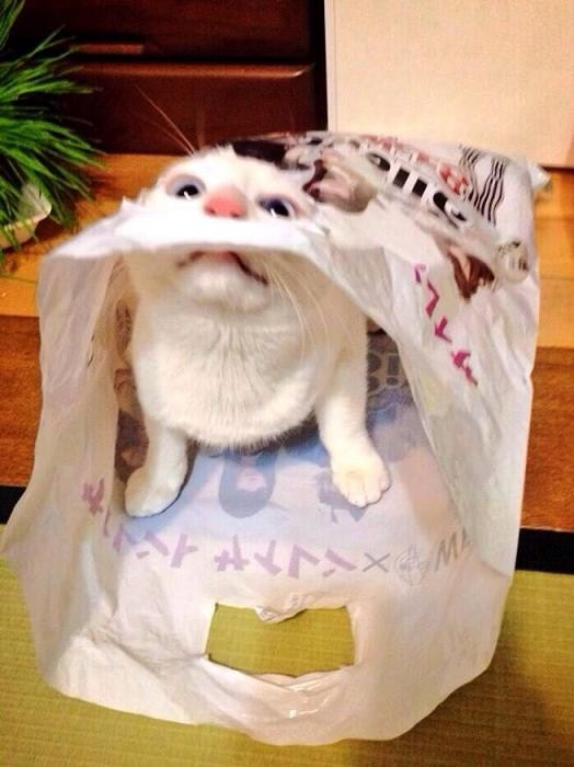 2014.2しいちゃん袋