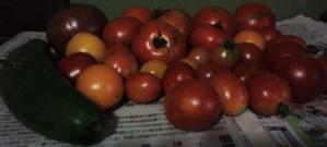 20140901収穫