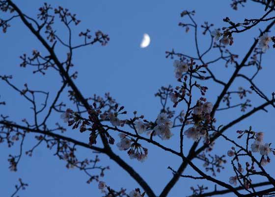 桜の園02