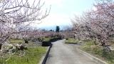 20140308寒川神社144