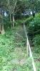 20140712原生の森029