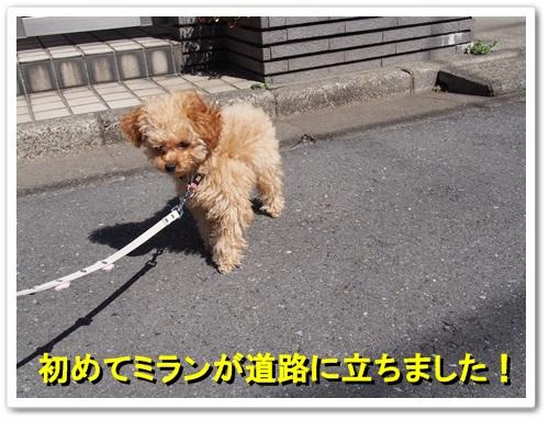 20140322_001.jpg