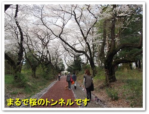 20140404_078.jpg