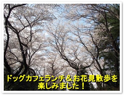 20140404_080.jpg
