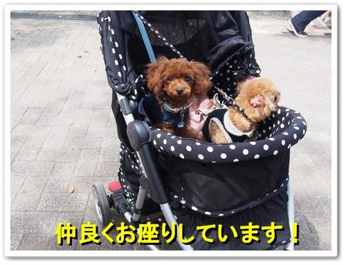 20140413_017.jpg