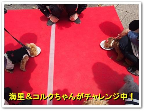 20140413_092.jpg