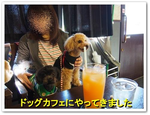 20140415_032.jpg
