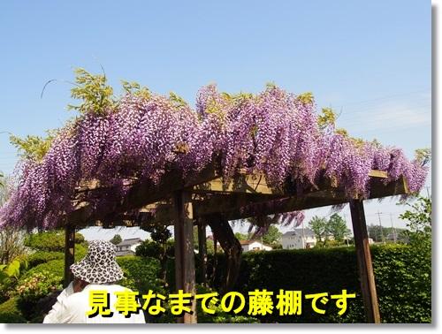 20140427_109.jpg