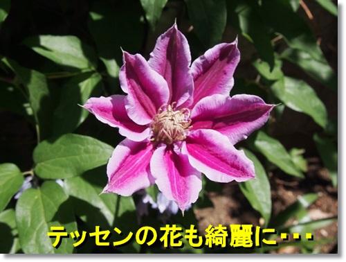 20140504_017.jpg