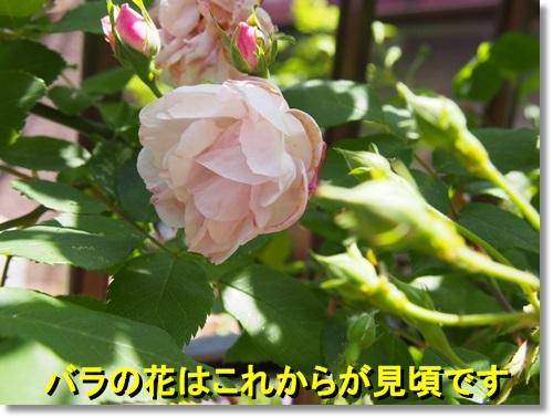 20140504_022.jpg