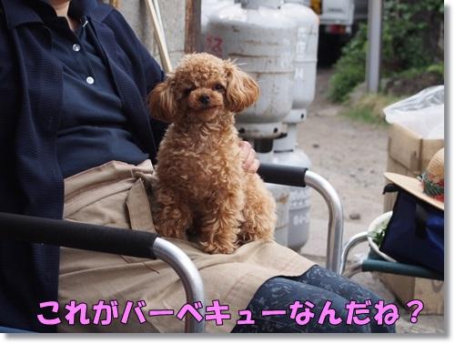 20140504_105.jpg