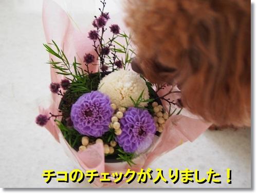 20140511_038.jpg