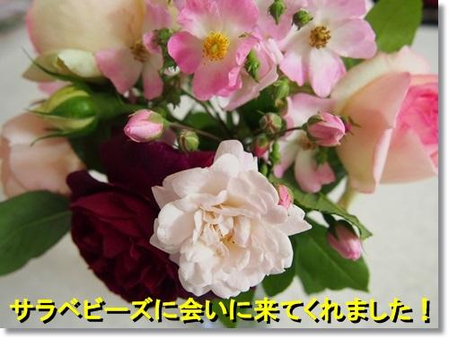 20140515_058.jpg