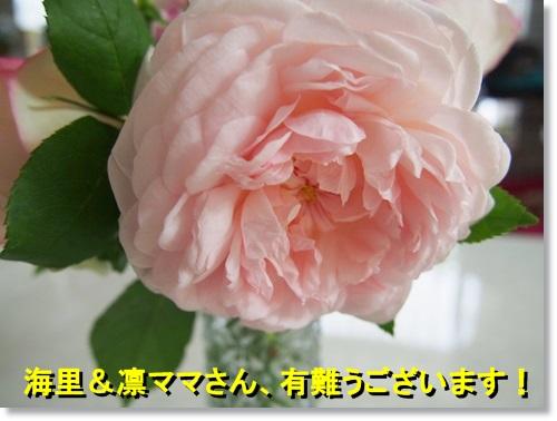 20140515_063.jpg