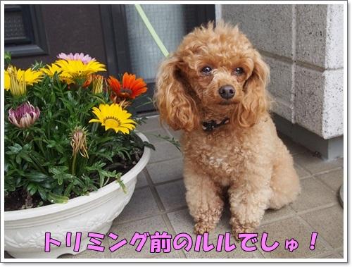 20140516_008.jpg