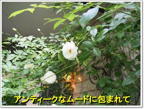 20140516_125.jpg