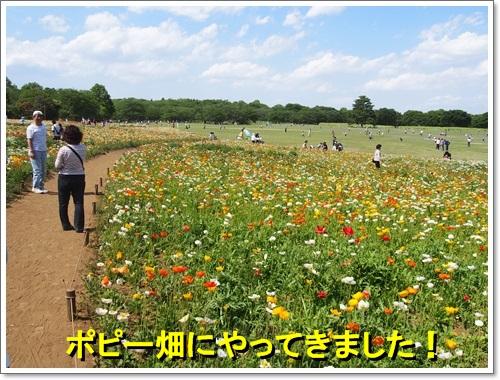 20140518_074.jpg