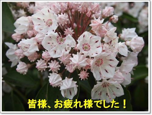20140518_126.jpg