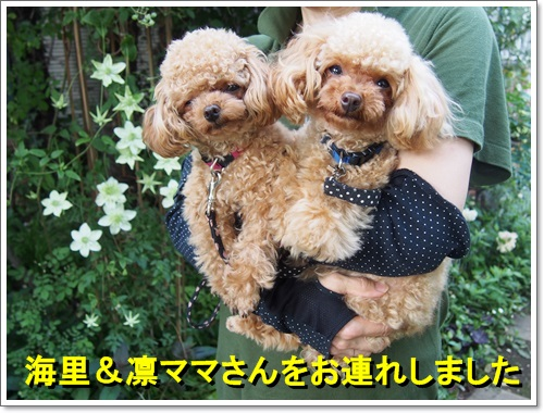 20140525_036_01.jpg