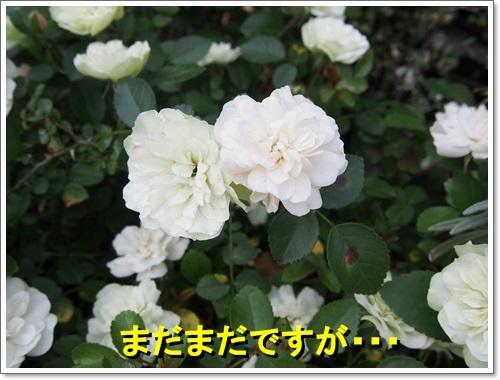 20140525_040_01.jpg
