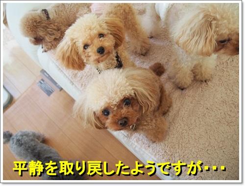 20140601_014.jpg
