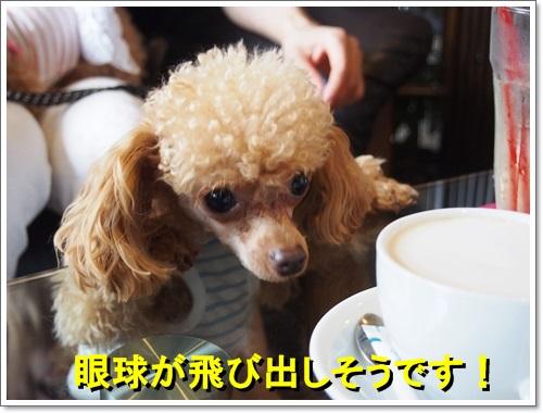 20140619_120.jpg