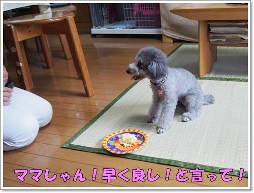 20140710_074_01.jpg