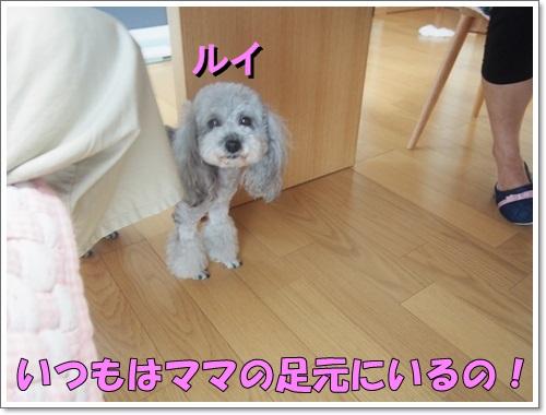 20140812_006_01.jpg