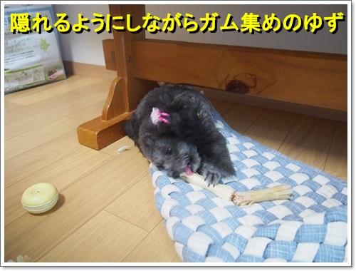 20140812_067.jpg