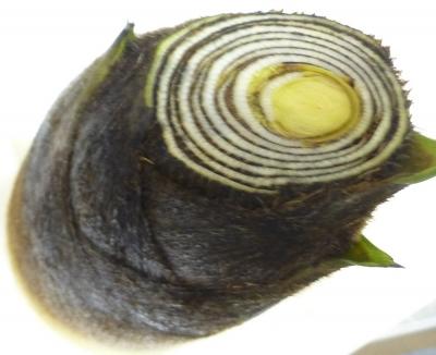 タケノコ140424