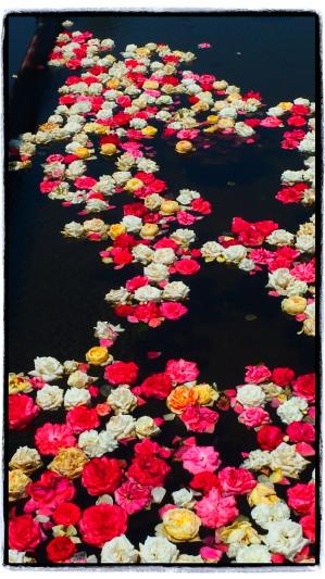 バラを浮かべたお風呂に入りたい…。