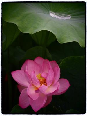嫌な雨降りも、お花を撮るには写真日和。