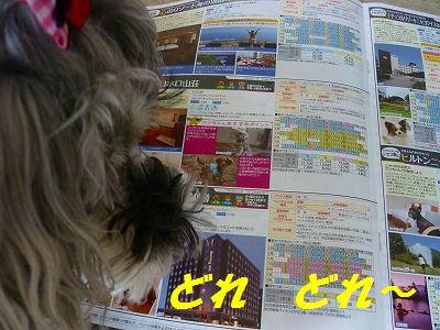 P1170688_20140530194444090.jpg
