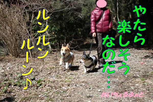 DPP_3478.jpg