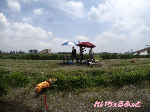 DPP_4535.jpg