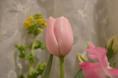 春のハナ8