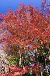 そらに伸びる秋