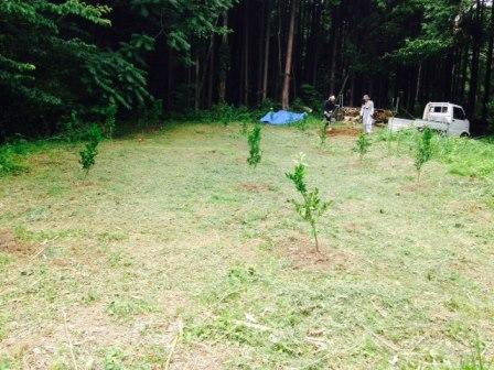 森のたね 森づくり ミカン畑作業後