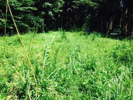 森のたね 森づくり ミカン畑作業前