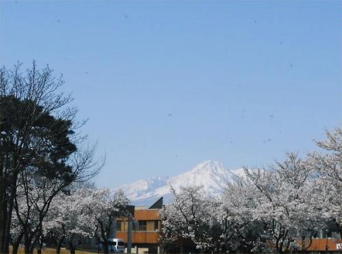 00c 600 20140412 桜満開妙高山はね馬