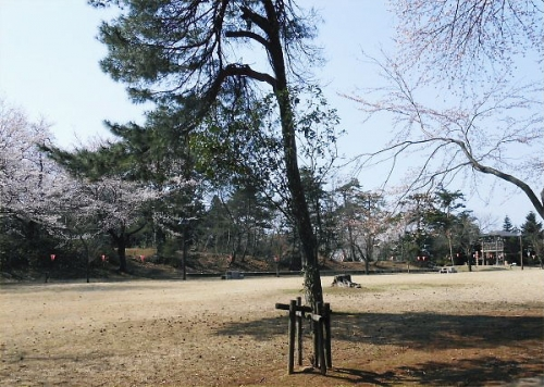 01 600 20140411 経塚山桜02