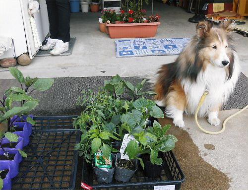 04 500 20140511 LL庭Planting01Erie